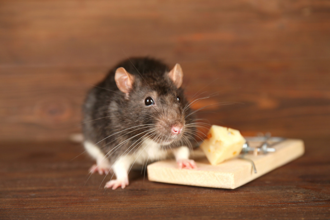 Keep Rats and Mice Out of Your Home This Winter